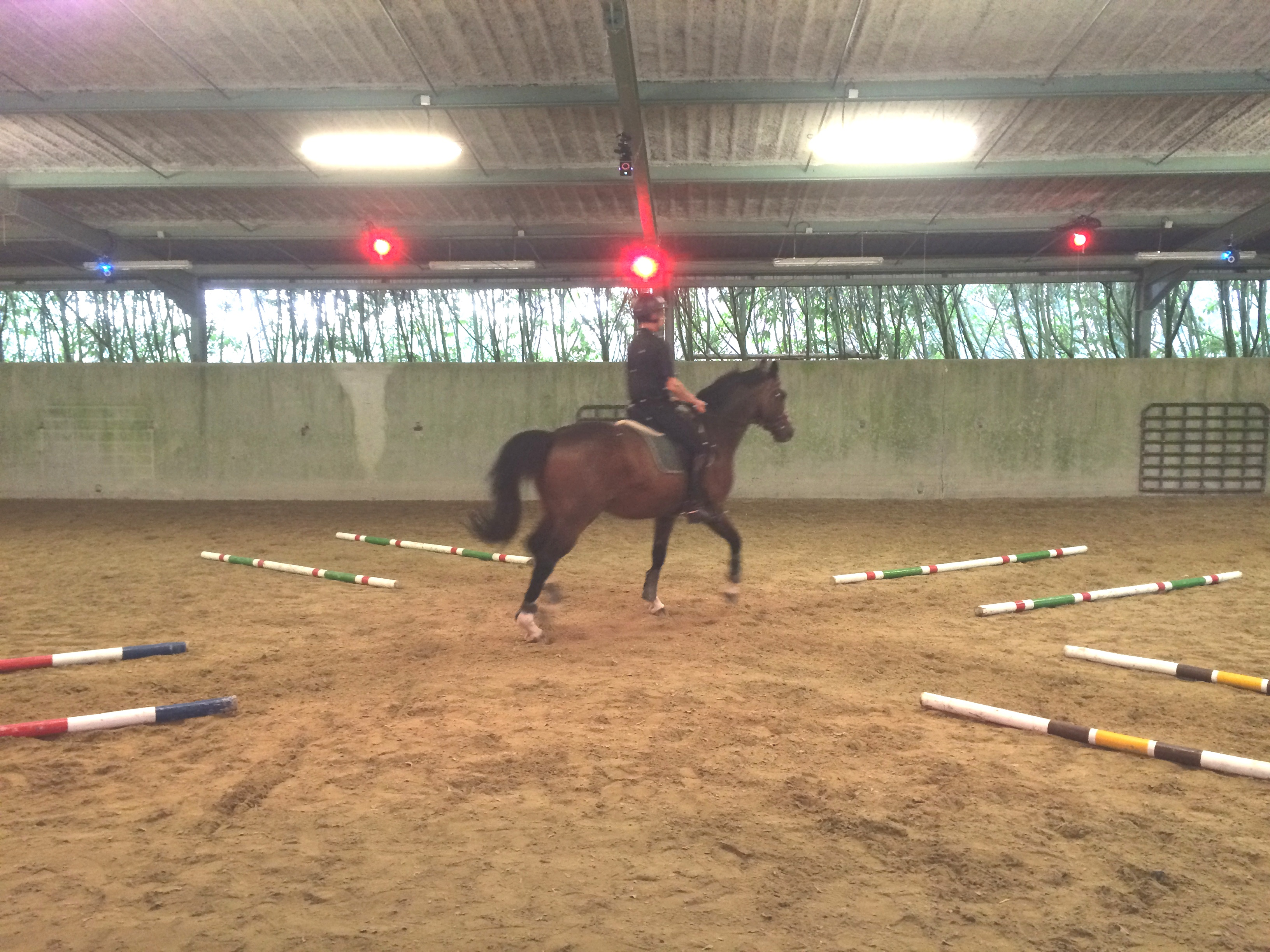 Motion capture and analysis of elite riders in Cadre Noir Saumur