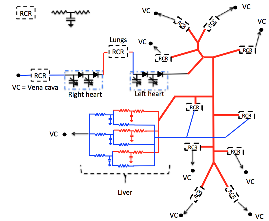 Blood Flow Modeling