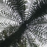 """French Science Festival: conference on """"plants and fractals"""" at high-school"""